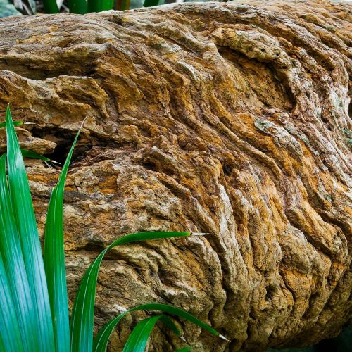 Textured old withering log with a fern