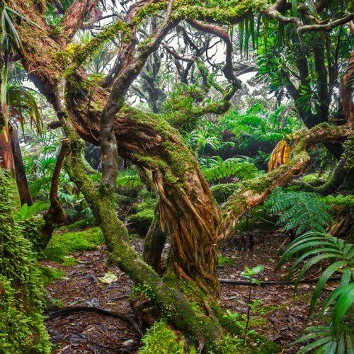 Moss on a winding tree